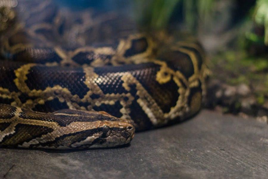 Τον δάγκωσε φίδι και δάγκωσε τη γυναίκα του για να πεθάνουν μαζί