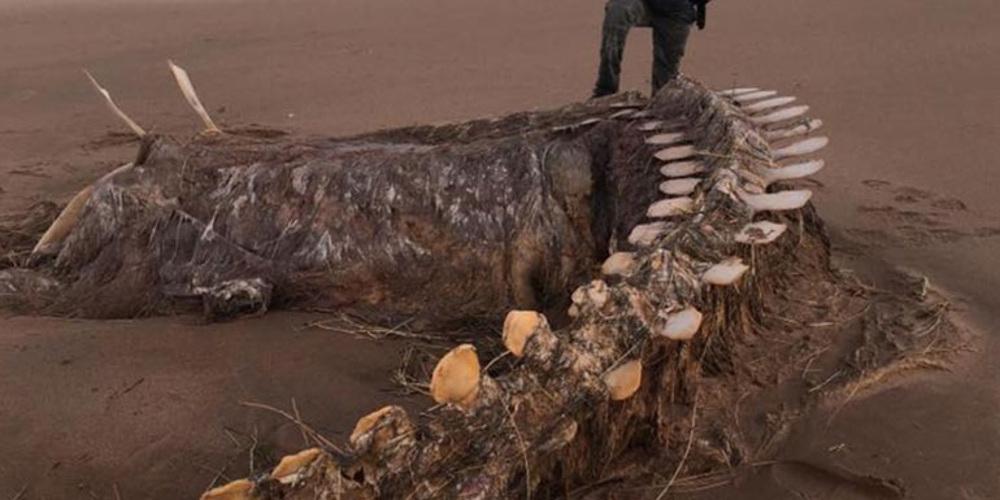 Μυστήριο με τεράστιο σκελετό που ξεβράστηκε σε παραλία στην Σκωτία – Είναι το τέρας του Λοχ Νες;