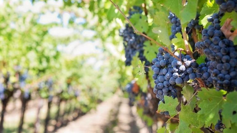 Γεμάτες οι δεξαμενές κρασιού…90 μέρες πριν τον τρύγο!