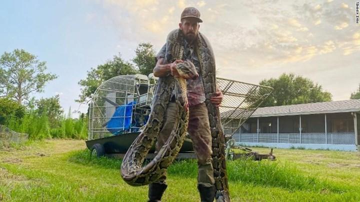 Ο καουμπόι των… πυθώνων: Μάχη ζωής και θανάτου με φίδι πέντε μέτρων