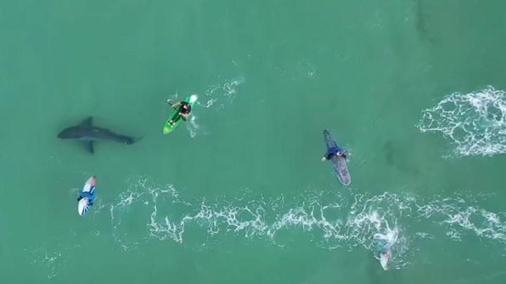 """Νότια Αφρική: Λευκός καρχαρίας """"παραμονεύει"""" δίπλα από σέρφερ – ΒΙΝΤΕΟ από drone"""