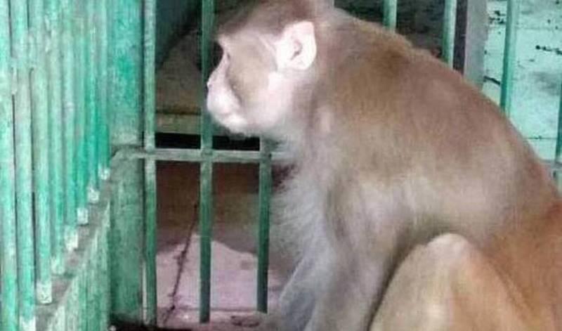 Μανιακές με το σεξ μαϊμούδες έχουν καταλάβει μία πόλη, κλείνοντας τους κατοίκους στα σπίτια τους (vids)