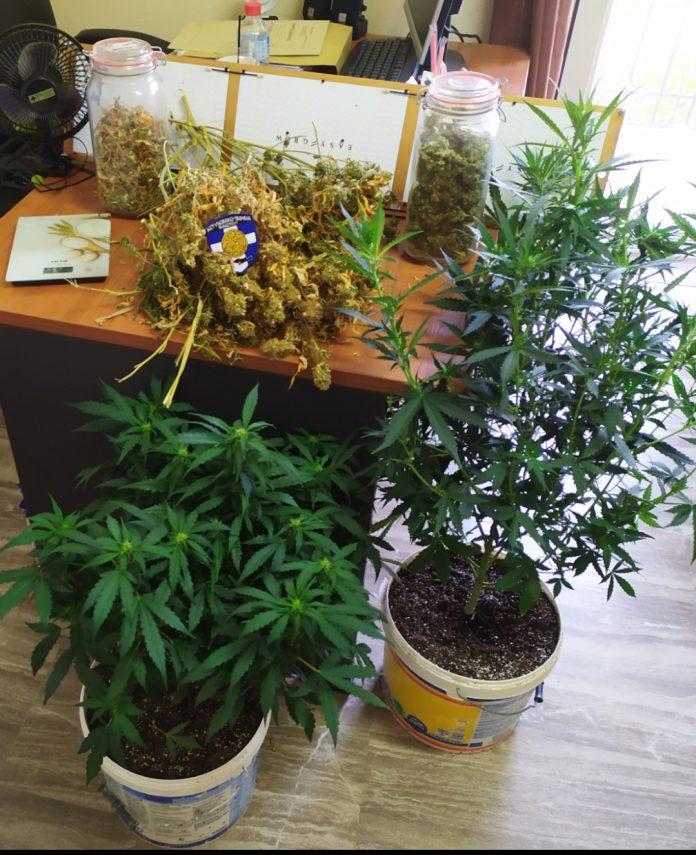 """""""Καλλιεργούσε"""" ναρκωτικά – Σύλληψη ενός ατόμου"""