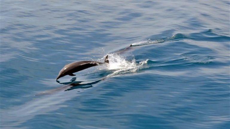 Φρίκη! Έγδαραν και έδεσαν δελφίνι σε βράχια