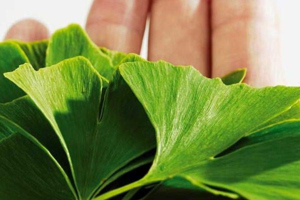 Το φυτό που το αποκαλούν και «βιάγκρα της φύσης»