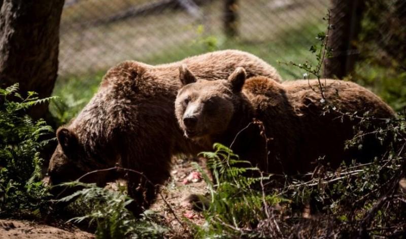 Αρκούδα βρέθηκε κοντά σε αεροπλάνο και… επιβιβάστηκε (video)