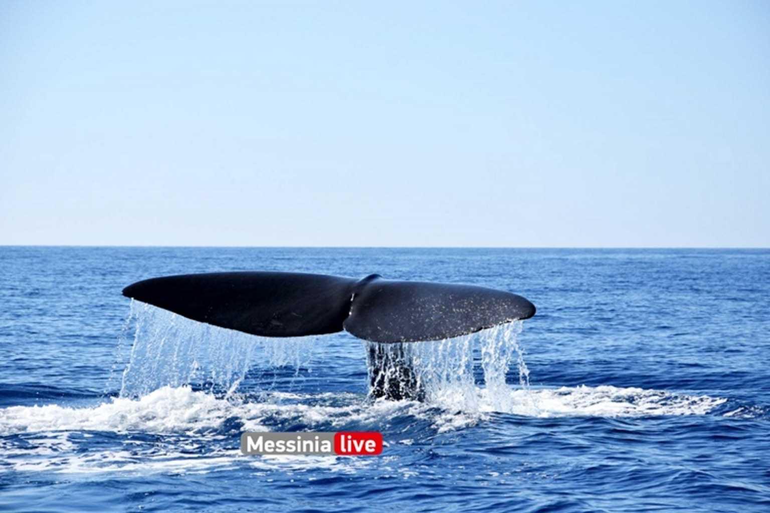 Μάνη: Η στιγμή που τεράστια φάλαινα εμφανίζεται δίπλα σε σκάφος και ανεβάζει στα ύψη την αδρεναλίνη παρέας (Φωτό)