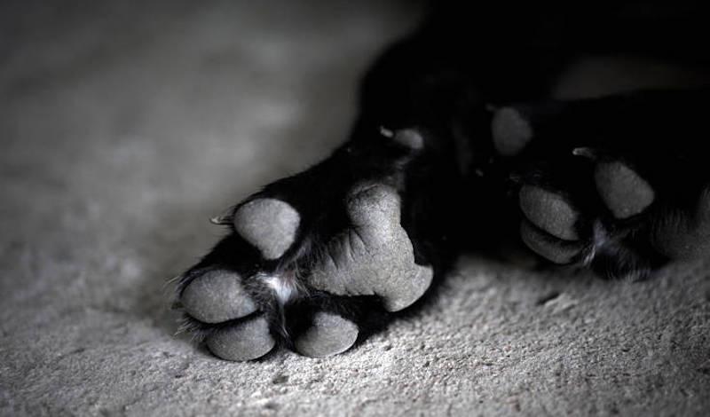 Λάρισα: Φοιτητής άφησε μόνο του τον σκύλο του στο σπίτι και πέθανε