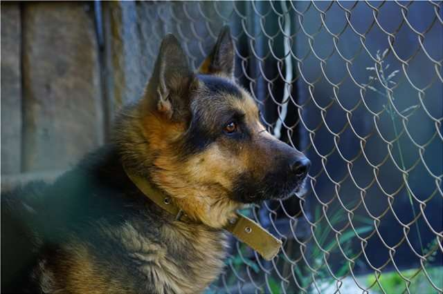 Σκυλιά επιτέθηκαν σε 2χρονο στην Ουκρανία και του του έκοψαν τους όρχεις – Χαροπαλεύει το αγόρι