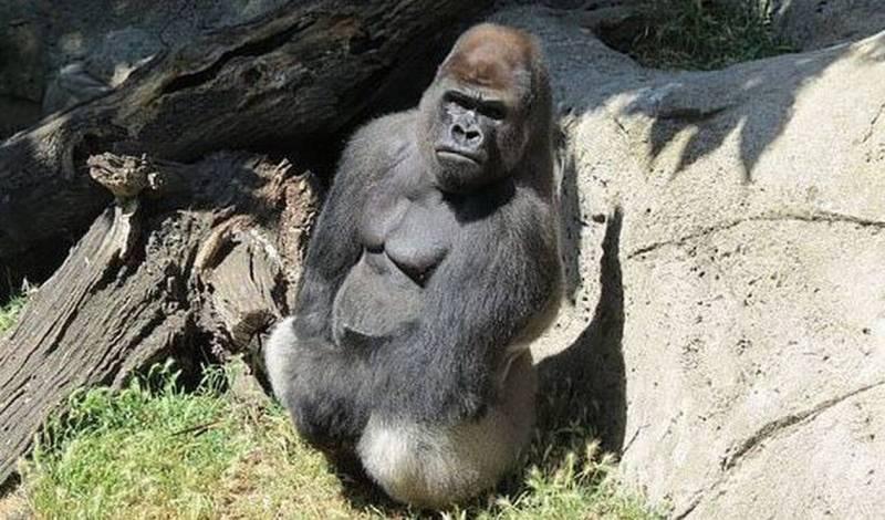 Τρόμος σε ζωολογικό κήπο: Γορίλας σακάτεψε εργαζόμενη