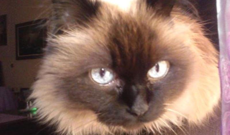 Κορωνοϊός: Οι γάτες μεταδίδουν μεταξύ τους τον ιό, οι σκύλοι όχι