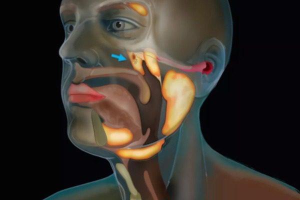 Επιστήμονες ανακάλυψαν τυχαία ένα νέο όργανο στον ανθρώπινο λαιμό