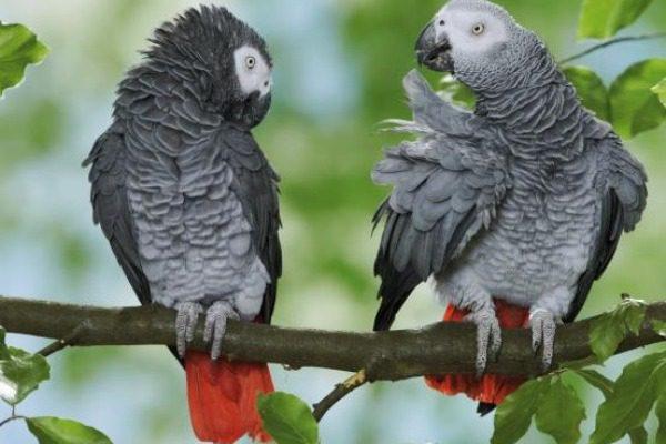 Χώρισαν 5 παπαγάλους σε ζωολογικό κήπο επειδή… έβριζαν όταν ήταν μαζί