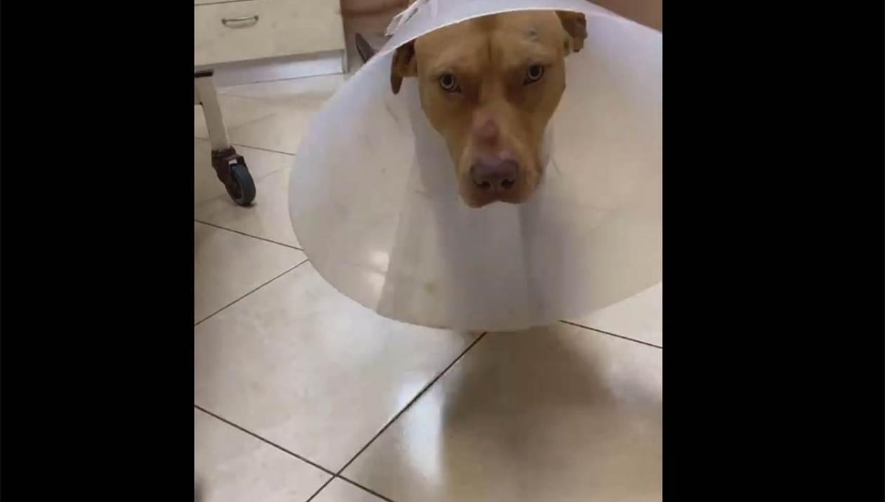 Κρήτη  Κτηνωδία στα Χανιά: Παρά τα βασανίστρια ο σκύλος σώθηκε – Ανθρωποκυνηγητό για το δράστη
