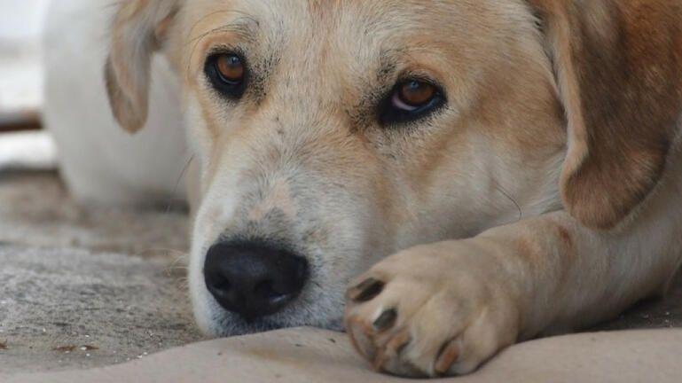 Πρώτη σύλληψη στην Κρήτη, μετά τις αυστηρότερες ποινές για την κακοποίηση των ζώων