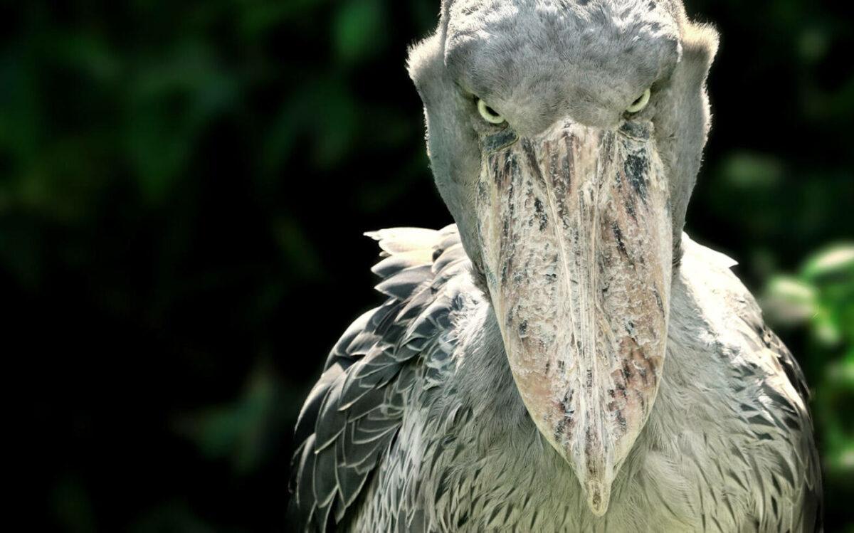 Τρομακτικά πουλιά που θα σας κάνουν να δείτε αλλιώς το βασίλειο των πτηνών