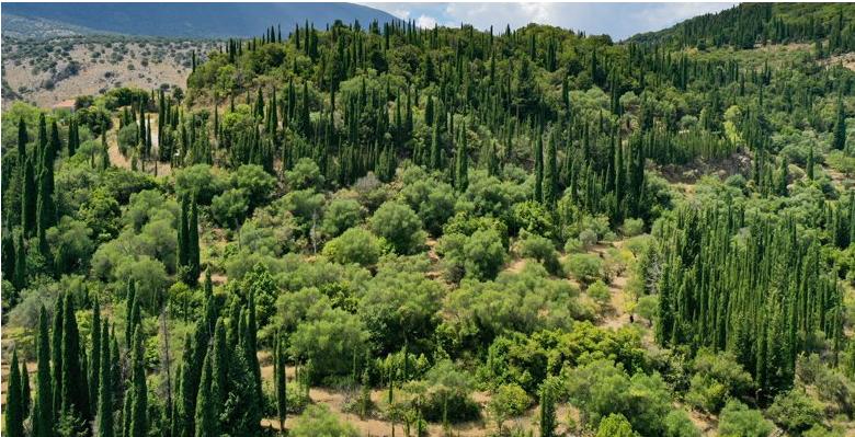 Το ελληνικό δάσος που έχει κάτι μοναδικό σε όλον τον κόσμο