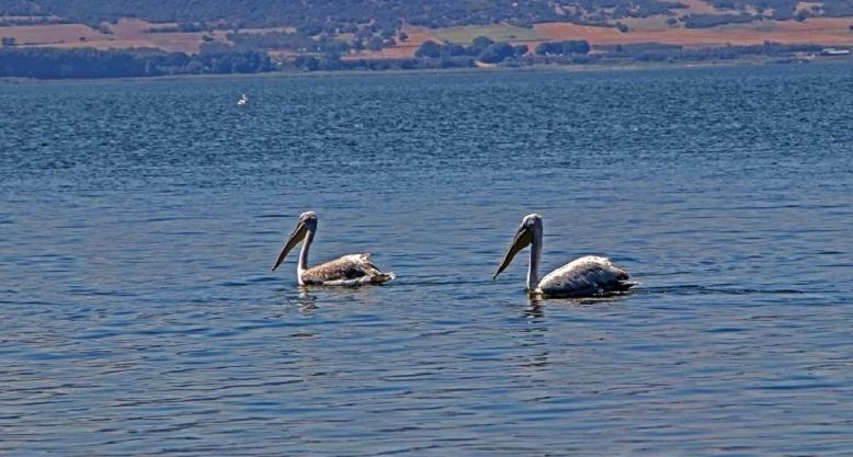 Βόλβη: Η δεύτερη μεγαλύτερη φυσική ελληνική λίμνη με την καθηλωτική ομορφιά
