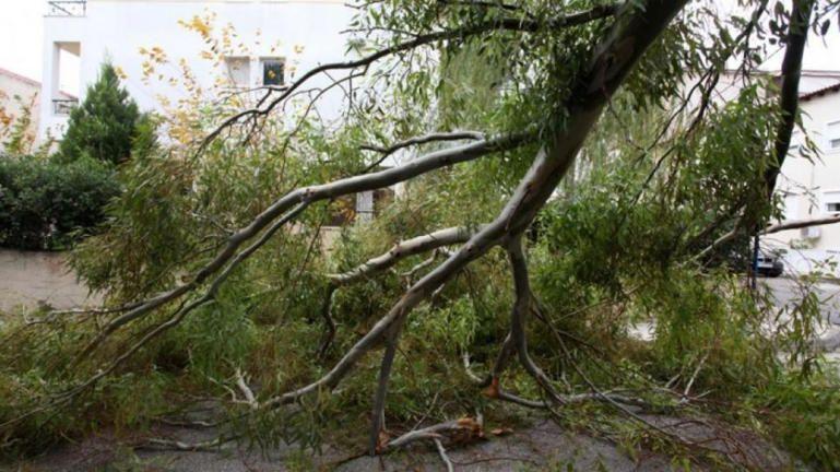 Τον πλάκωσε το δέντρο και τον σκότωσε
