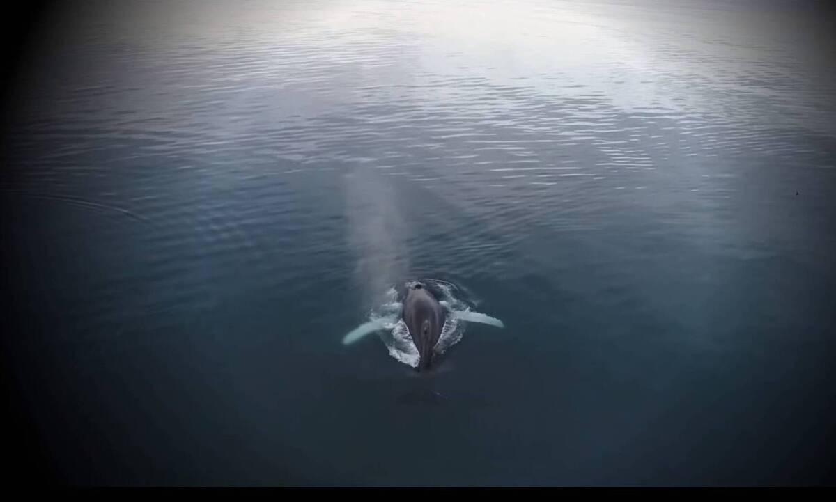 Ο άνθρωπος που έμεινε για τρεις μέρες στην κοιλιά της φάλαινας (video)