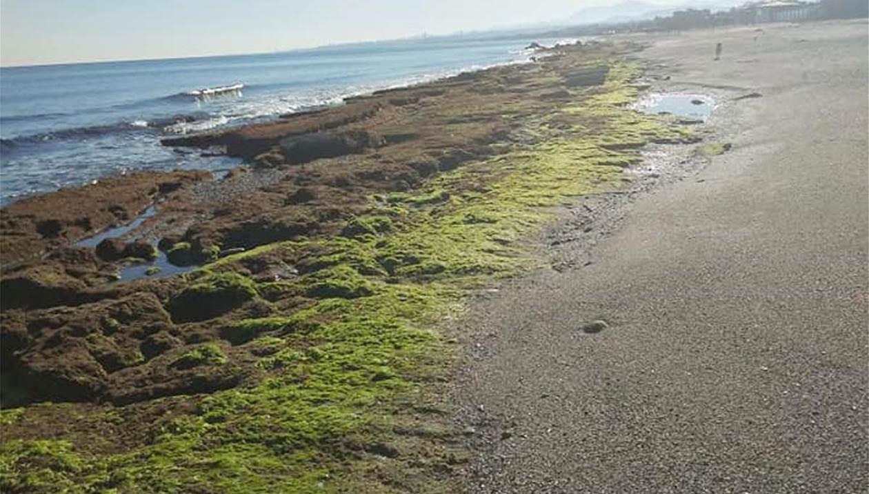 Εντυπωσιακό φαινόμενο: Η θάλασσα υποχώρησε στην Αμμουδάρα -Η εξήγηση των ειδικών /photos