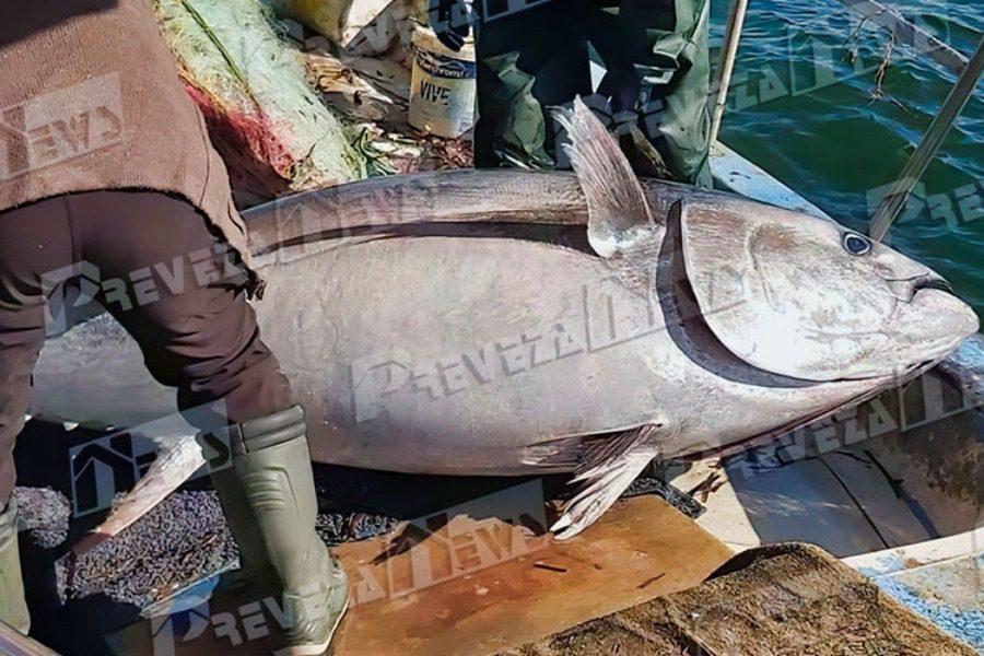 Πρέβεζα: Δεν είναι μοντάζ αλλά το ψάρι που έπιασαν