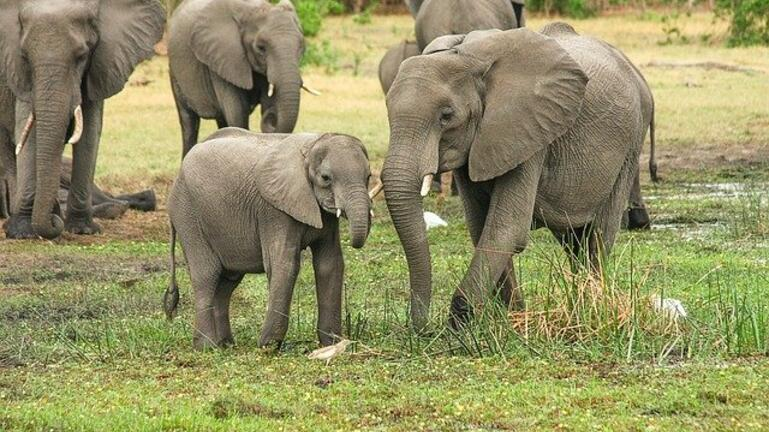 Ελεφαντάκι στην Ινδία έπεσε σε πηγάδι και σώθηκε από τις αρχές