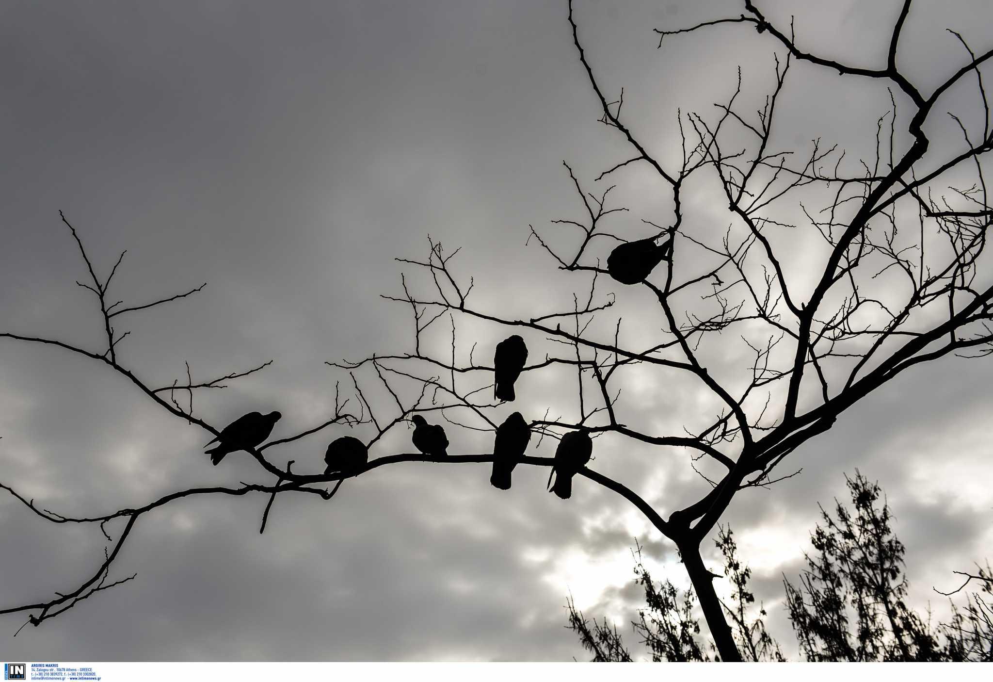 Χανιά: Συγκλονίζει η νέα αυτοκτονία – Άφησε σημείωμα και κρεμάστηκε σε δέντρο