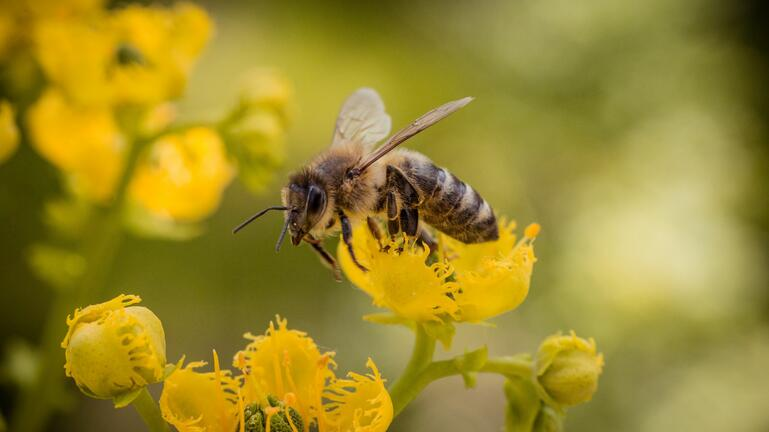 Στο μικροσκόπιο μέλισσες, κουνούπια, βρωμούσες και άλλα έντομα της Κρήτης