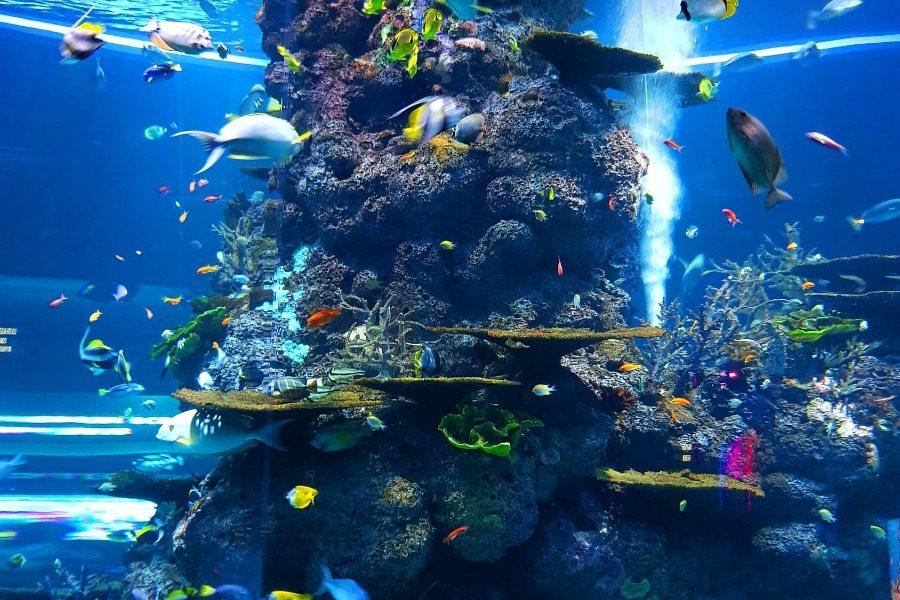 Τα ομορφότερα θαλάσσια πλάσματα που είδε ποτέ ο πλανήτης