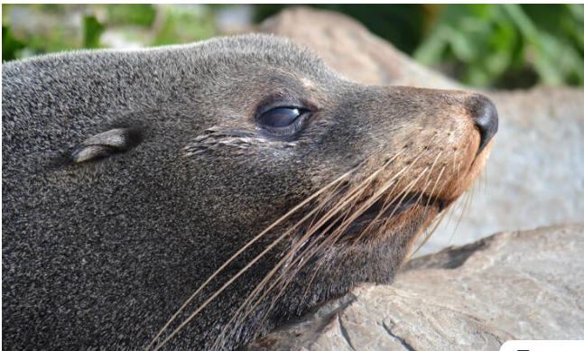 Αλόννησος: Τουρίστρια πήγε να χαϊδέψει φώκια και τη δάγκωσε