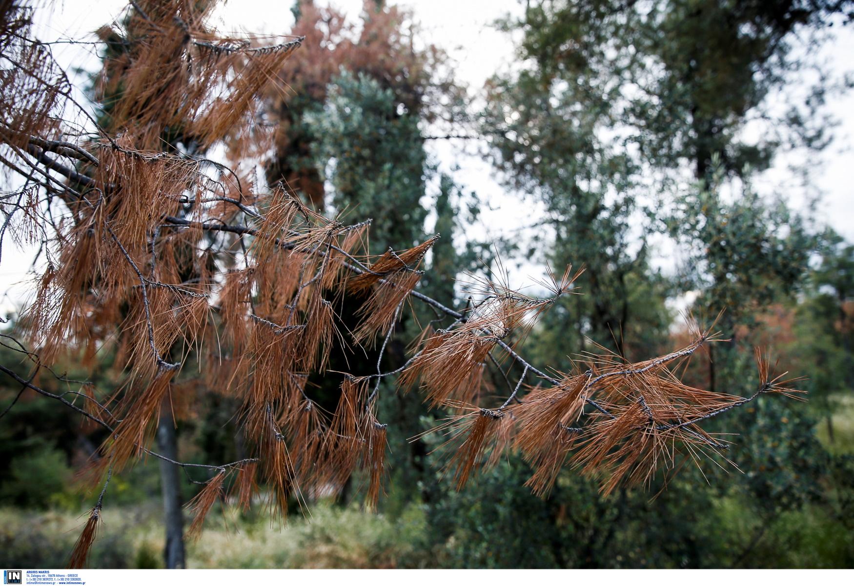 Κρήτη: Πήγε να αποφύγει τους θηροφύλακες και τράκαρε με δέντρο