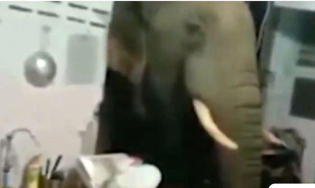 Ελέφαντας γκρεμίζει τοίχο σπιτιού και ψάχνει τα ντουλάπια για φαγητό