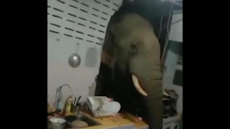 Ελέφαντας εισβάλει σε σπίτι και ψάχνει για τροφή
