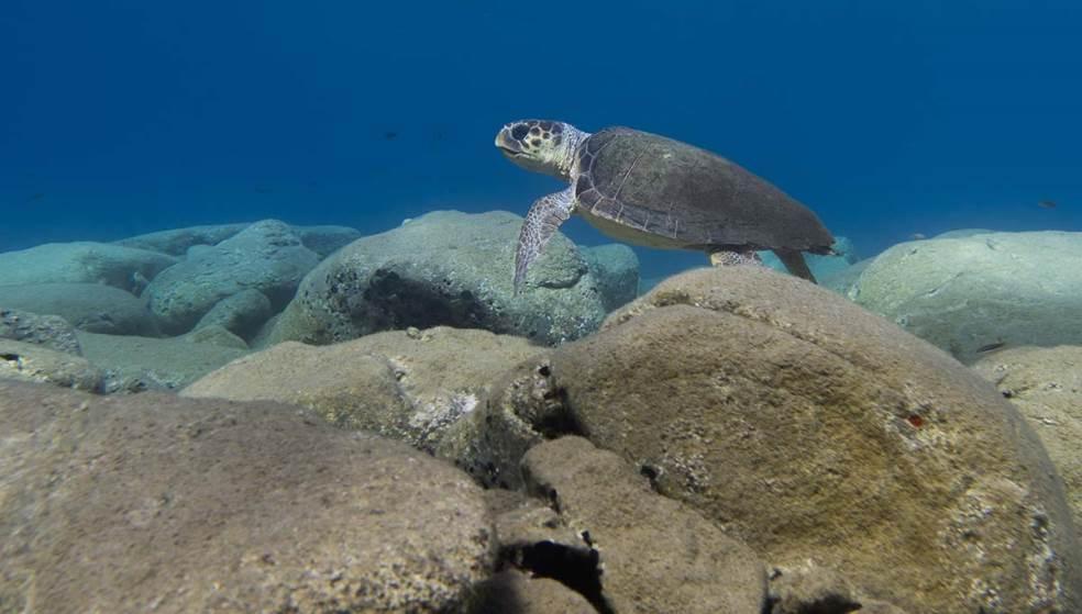 Η χελώνα caretta caretta συνεχίζει να έρχεται στις παραλίες της Κρήτης για να γεννήσει