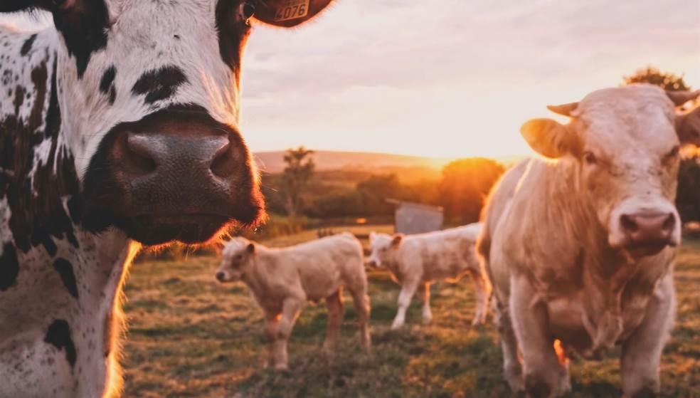 Ζωοτροφές με πρωτεΐνες από… «πτώματα» ζώων στην Ευρώπη!
