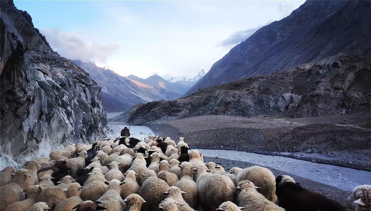 «Επιδοτήστε ζωοτροφές και μεταφορικό κόστος» - Κραυγή αγωνίας από τους κτηνοτρόφους της Κρήτης