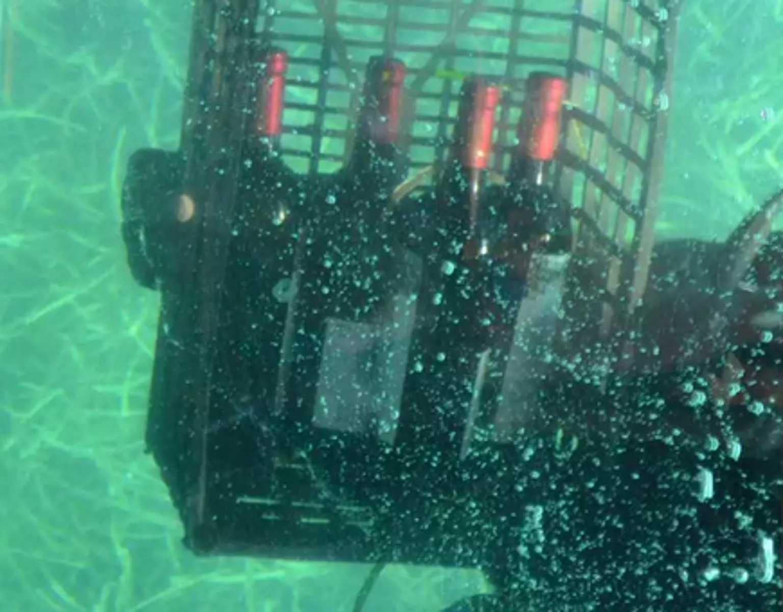 Άγιο Όρος: Αυτό είναι το κρασί που μένει 12 μήνες στο βυθό της θάλασσας – «Βροχή» οι παραγγελίες