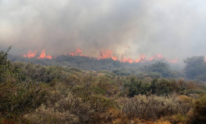 Φωτιά ΤΩΡΑ στην Κερατέα – Κοντά σε σπίτια οι φλόγες