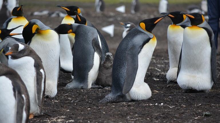 Μέλισσες τίμπησαν μέχρι θανάτου 63 πιγκουίνους στη Νότια Αφρική