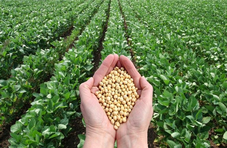 First Mediterranean green regional seed bank on Crete