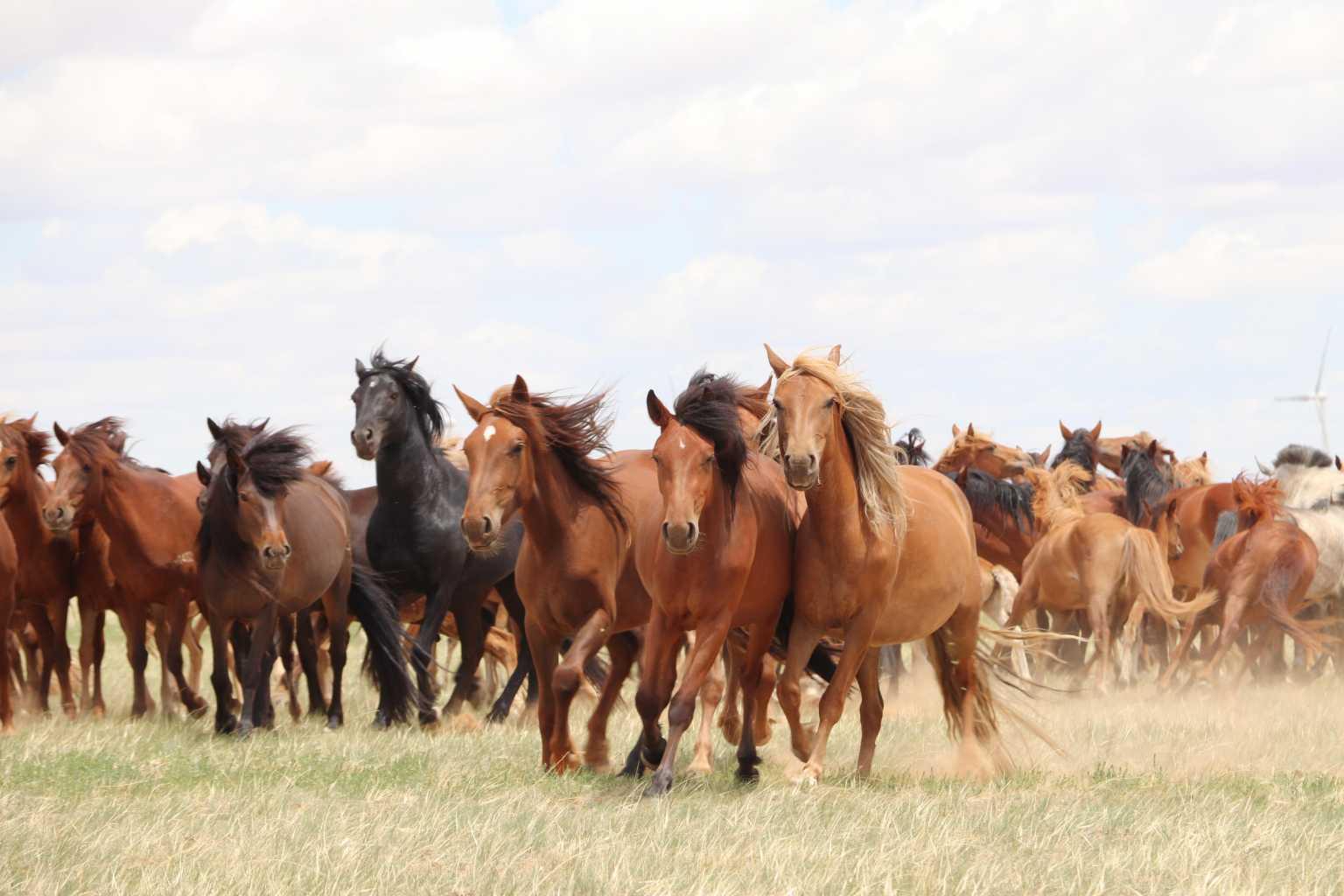 Τα άλογα εξημερώθηκαν πριν από 4.200 χρόνια – Τι αποκάλυψε το DNA τους