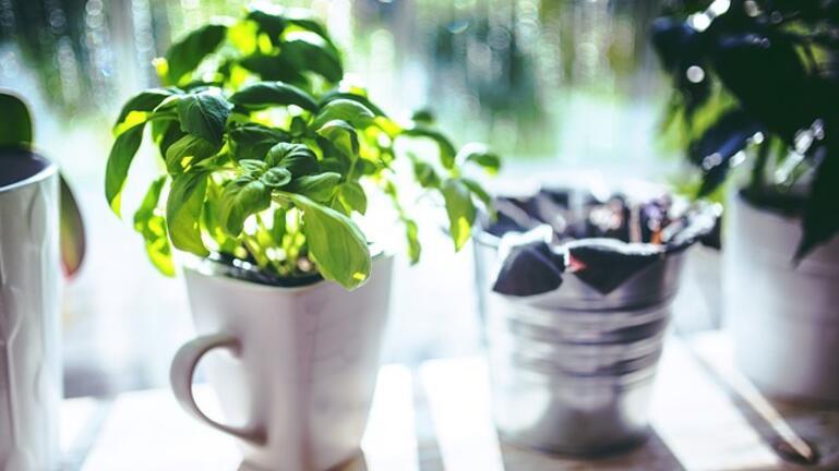 Τα τρία φυτά που φέρνουν θετική διάθεση στο σπίτι