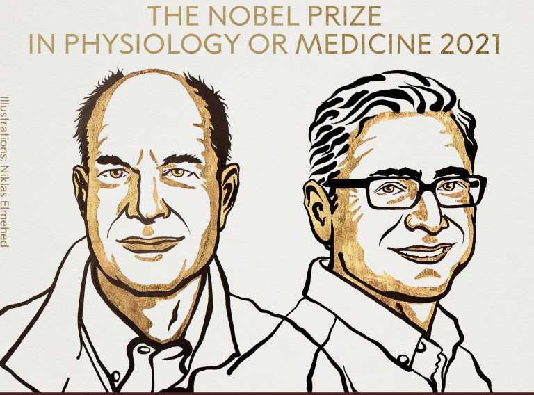 Νόμπελ Ιατρικής: Στους Ντέιβιντ Τζούλιους και Αρντέμ Παταπουτιάν