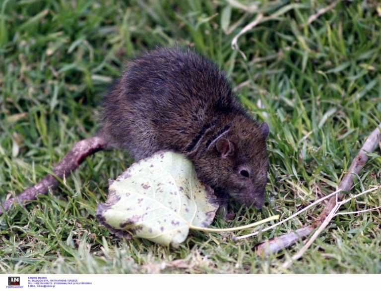 Ιταλία: Κατασχέθηκαν εκατοντάδες νεκρά ποντίκια της μαφίας έτοιμα προς κατανάλωση