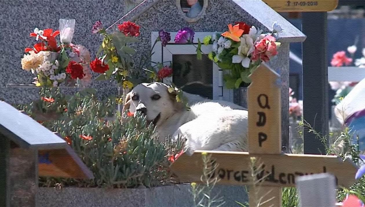 Μπόμπι: Ο σκύλος που αρνείται να εγκαταλείψει τον τάφο του αφεντικού του