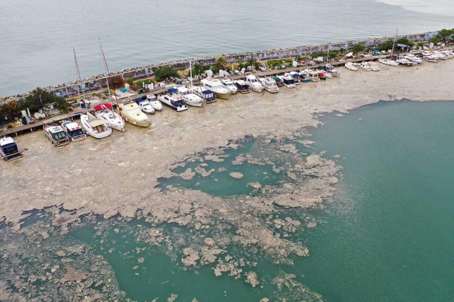 Θάλασσα Μαρμαρά: Εμφανίστηκε και πάλι η τοξική βλέννα – Φόβος για μολυσμένα ψάρια